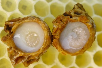 The Royal Jelly Benefits: an Excellent Beauty Elixir